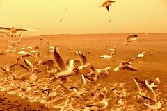 Coastal birds. A lot of seagulls and snaws at seashore,Varna Bulgaria,Black Sea coast Stock Image