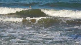 Coastal Black sea waves stock footage