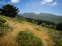 Coastal Chaparral with Montara Mountain in the distance, Montara State Beach. Horizon of pacific ocean with mist over ocean and sunny chaparral or brush in stock images