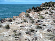 Coastal Cliffs. Rugged pothole pitted sandstone coastal cliff landscape taken in Robe, South Australia Stock Images