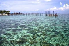 Coastal coral and seaweed Stock Photo