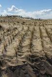 Coastal defence sand dunes Royalty Free Stock Image