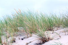 Coastal dune Royalty Free Stock Photo
