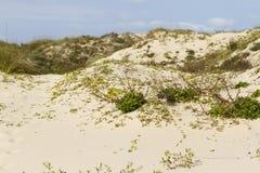 Coastal dunes Royalty Free Stock Image