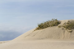 Coastal dunes Royalty Free Stock Image