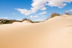 Coastal dunes Royalty Free Stock Photos