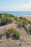 Coastal dunes at the mouth of Llobregat. Beach off Viladecans, Barcelona, located in the Delta del Llobregat. This area of coastal dunes, is of great ecological Royalty Free Stock Photos