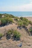 Coastal dunes at the mouth of Llobregat. Royalty Free Stock Photos