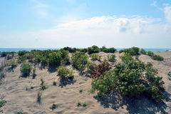 Coastal dunes at the mouth of Llobregat. Beach off Viladecans, Barcelona, located in the Delta del Llobregat. This area of coastal dunes, is of great ecological Royalty Free Stock Images