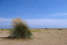 Coastal Environment: Bush Stock Image