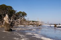 Driftwood Beach at Hunting Island State Park in Georgia royalty free stock photography