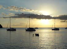 Coastal evening scenery at Guadeloupe Stock Photos