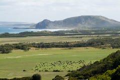 Coastal Fields. Lush farmland meets rough sea's on Western Tasmania's Green Point, near Marrawah stock photography