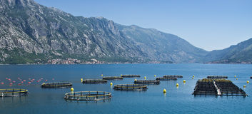 Coastal fish farming. In Montenegro Royalty Free Stock Photography