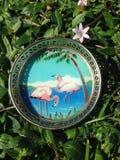 Coastal Flamingo Coaster Royalty Free Stock Photo