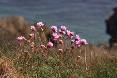 Coastal Flora and fauna. Around the Range on the Isle of Anglesey Wales Stock Photography