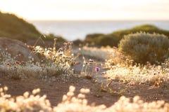 Coastal flowering vegetation by sunset Stock Photo