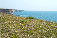 Coastal flowers Royalty Free Stock Photos