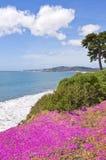 Coastal Flowers Stock Photography