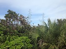 Coastal Foliage Stock Photography