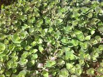 Coastal foliage Stock Photo