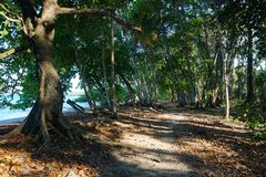 Coastal footpath on Caribbean shore of Costa Rica Royalty Free Stock Image