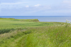 Coastal footpath at Flamborough Head, Yorkshire, UK Stock Images
