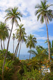 Coastal footpath under coconut trees Stock Images