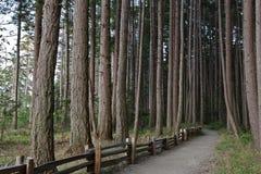 Coastal forest Royalty Free Stock Photos