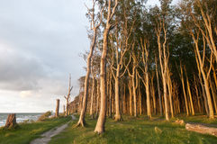 Coastal forest. In sun light Royalty Free Stock Photo