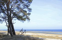 Coastal Forest on the Baltic Sea Stock Images