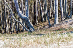 Coastal forest on the Baltic Sea Stock Photos