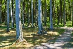 Coastal forest on the Baltic Sea coast in Nienhagen Stock Photo