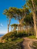 Coastal forest on the Baltic Sea coast Stock Photo