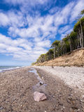 Coastal forest on the Baltic Sea coast Stock Photography