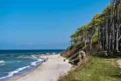 Coastal forest on the Baltic Sea coast Stock Photos