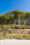 Coastal forest on the Baltic Sea coast Stock Photography