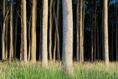 Coastal forest on the Baltic Sea coast in Nienhagen Royalty Free Stock Images