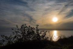 Coastal forest on the Baltic Sea coast in Nienhagen Stock Photography