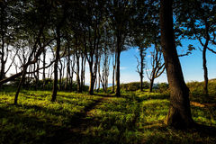 Coastal forest on the Baltic Sea coast in Nienhagen Royalty Free Stock Image