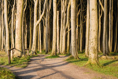 Coastal forest on the Baltic Sea coast in Nienhagen Royalty Free Stock Photography