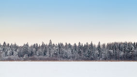 Coastal forest on frozen lake in winter season Royalty Free Stock Photo