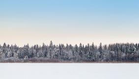Coastal forest on frozen lake in winter season royalty free stock photo