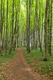 Coastal forest on the island Ruegen, Germany Stock Image