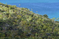 Coastal forest with native flora Stock Images