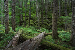 Coastal forest Stock Photography