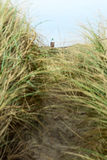 Coastal grass and lighthouse Stock Photo