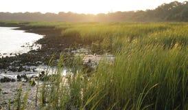 Coastal Grasses Stock Image