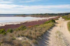 Coastal Grasses at Hutt Lagoon Royalty Free Stock Photos