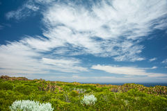 Coastal Heath Stock Photos